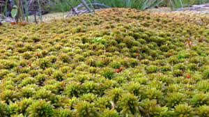 sphagnum moss nutrients pro tips for hydroponics gardeners