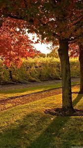 Nature Tree Leaves Autumn Garden ...