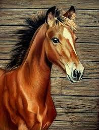 horse drawing in color. Exellent Drawing Image Result For Cute Realistic Horse To Draw In Color With Horse Drawing In Color O