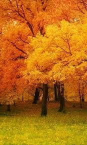 Pin by Ida Steele on Amazing fall | Autumn scenery, Autumn scenes, Scenery