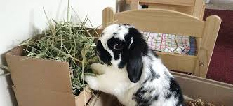 hay hay and more hay supreme petfoods