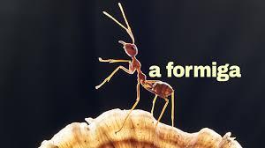 Resultado de imagem para a formiga