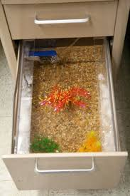 fish for office. filing cabinet converted to fish tank for office