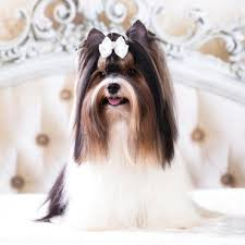 home remes for matted dog hair