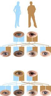 Eye Gene Chart Recessive Genes Dominant Eye Color Dk Find Out