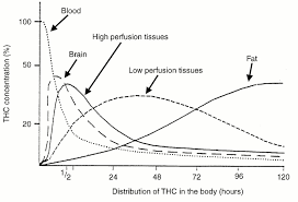 Weed High Chart Human Metabolism Of Thc Sapiensoup Blog
