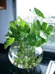 Office cubicle plants Ideas Cubicle Plants Office Cubicle Plants Best Indoor Desk Plants Cubicle That Die On You Cubicle Hanging Cubicle Plants Netsportsclub Cubicle Plants Office Plant Service In Cubicle Decor Plants