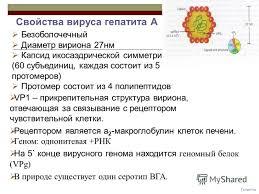 Презентация на тему Гепатит А Вирус гепатита А ВГА hav  2 Гепатиты Безоболочечный