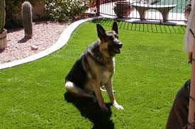 artificial grass for pets. The Pads Of Your Pet\u0027s Feet Are Sensitive And React Quickly To Hot Pavement Or Rock. It\u0027s Not Just A Nicety Have Temperature-controlled Surface Artificial Grass For Pets