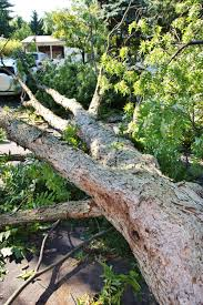 Legal Liability for Tree Damage in Maryland, Virginia, and DC ...