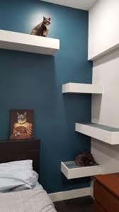 Corner Cat Shelves I Built Some Cat Shelves Cat Shelves Shelves And Cat 80