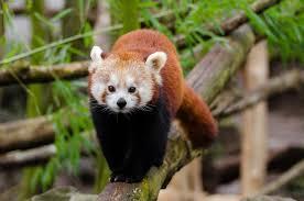 Arunachal Pradesh - Dibang Wildlife Sanctuary