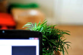 office cubicle plants. whether you work in a cubicle an open plan office or at home fresh air is key to health and productivity according nasa research adding least one plants