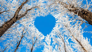 trees tree nature snow heart sky winter branches love awesome hd images