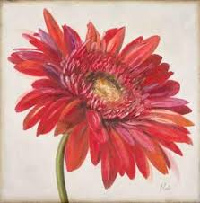 red gerber daisy on gerbera daisy canvas wall art with beautiful gerbera daisies artwork for sale posters and prints the