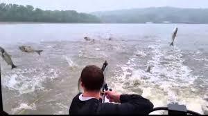 Asian carp invasion video