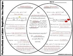 Photosynthesis Chart Worksheet Cellular Respiration And Photosynthesis Venn Diagram Kozen