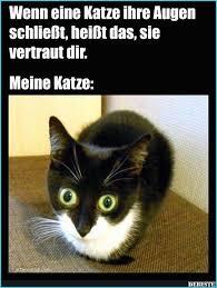 Lustige Katzenbilder Mit Sprüchen Lovely Bekannt Katzen Bilder Mit