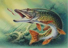 Pike Chart Details About Cross Stitch Chart Pattern Pike Northern Musky Fish Fishing Angling Game