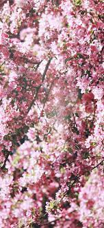 Best Spring iPhone X HD Wallpapers ...
