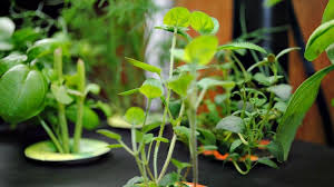 outdoor herb garden. Outdoor Herb Garden