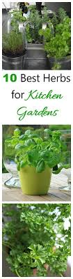 these are the best herbs for kitchen gardens all can be grown as indoor plants