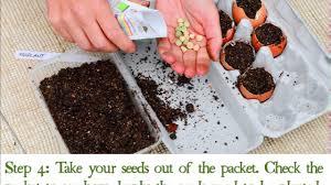 Stephanie Alexander Kitchen Garden Foundation How To Make Eggshell Planters Youtube