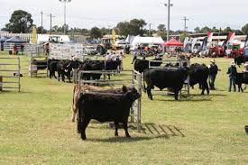 Section D - Cattle — Dubbo Show Society