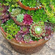 container gardening ideas monty