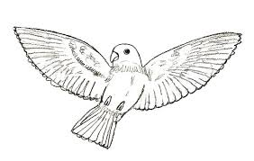 pictures of birds for drawing. Exellent Birds Bird Drawing Step 6 Throughout Pictures Of Birds For Drawing D