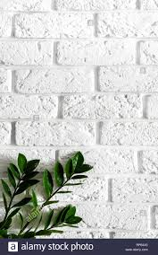 Interior Design Background Pictures Green Plant On White Brick Wall Modern Interior Design
