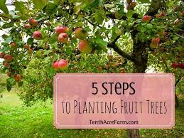 5 Steps To Planting Fruit Trees  Tenth Acre FarmWhen Do You Plant Fruit Trees