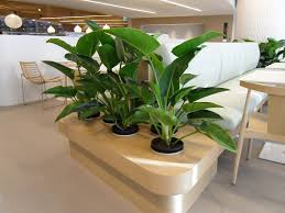 great office plants. Beautiful Blooming Indoor Plants Great Office