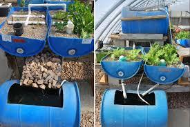 aquaponic gardening. aquaponic system with garden scraps gardening