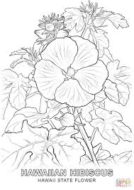Small Picture Hawaii State Flower coloring page Free Printable Coloring Pages