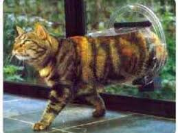 cat doors supplied glass fitted