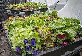 the best small vegetable garden ideas