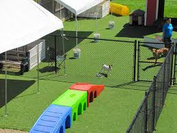 outdoor pet play area play4sm