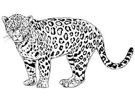 Leopard Coloring Pages Baby Leopard Colouring Pages Coloring