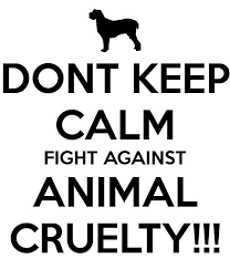 best animal rights images animal rights animal  stop animal abuse essay animal cruelty must stop by aisosa letters to the next president