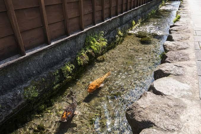 Ikan koi di selokan di jalan-jalan kota Shimabara