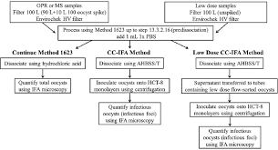 Flow Chart For 100 Oocyst And Low Dose Spiked Samples