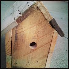 wren bird house plans. Bird Houses Plans Lovely Wren House Coffee Can Youtube Modern S