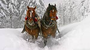 Christmas Horse Wallpapers - Top Free ...