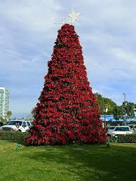 Kostenlose Bild Weihnachten Weihnachtsstern Baum San Diego