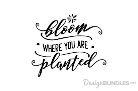It needs to be included at the top of your document (or at least before you reference an icon). Bloom Where You Are Planted Png Free Bloom Where You Are Planted Png Transparent Images 105793 Pngio