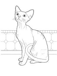 Cat 29 Cats Coloring Pages For