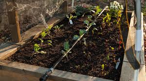 easy drip irrigation for raised beds