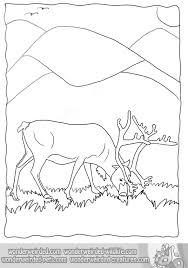 Small Picture Wildlife Coloring Pages Bestofcoloringcom