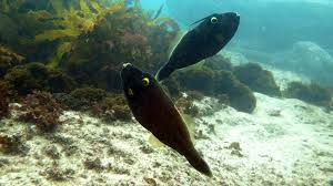 shelly beach dive site manly sydney nsw s dive how to